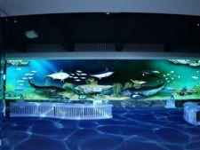 Se redeschide Muzeul Antipa