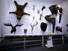 Ce vizitam azi: Muzeul Grigore Antipa