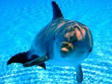 Nouaa specie de delfin, descoperita in Australia
