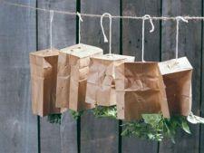 Cum sa usuci si sa pastrezi plantele aromatice din gradina ta