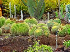 Cum sa-ti pregatesti o gradina de cactusi