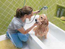 Cum sa-ti speli cainele acasa