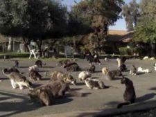 Cel mai mare adapost de pisici