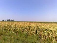Subventia de 42 de euro pe hectar cultivat se va acorda incepand cu 16 octombrie