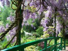 3 plante care risca sa iti invadeze gradina