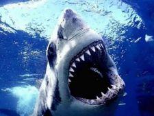 Lucruri pe care nu le stiai despre rechini