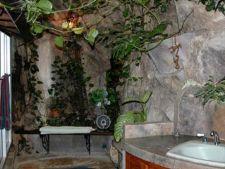 3 plante pe care le poti creste in baie