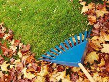 6 intrebuintari practice pentru frunzele de toamna