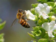 Foloseste-ti gradina pentru a ajuta albinele