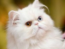 Cum scapi de parul de pisica din casa?