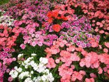 Cum alegi plantele potrivite pentru gradina ta
