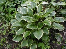 Plante pentru o gradina umbroasa si uscata