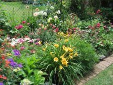 Cum sa-ti pregatesti florile pentru taiere