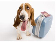 Ce trebuie sa stii daca mergi cu animalutul de companie in vacanta?