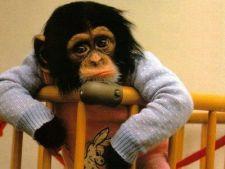 Reclamele cu animale dragute, efect nociv