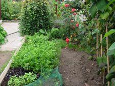 Prelungeste recolta legumelor toamna