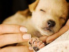 Comportamentul cainelui orfan - cum il dresezi?