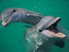 Tot ce nu stiai despre delfini