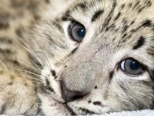 8 melodii despre animale