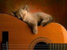 Cat poate sa doarma pisica mea?