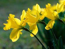 Plantarea bulbilor: sfaturi pentru incepatori