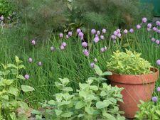 Cum sa amenajezi o gradina cu plante aromatice