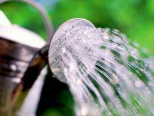 6 ponturi pentru a economisi apa in gradina