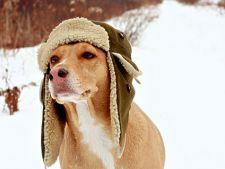 Cum sa-ti ingrijesti cainele in sezonul rece