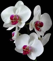 Tot ce nu stiai despre orhidee
