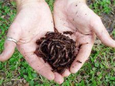 Cum elimini problemele compostului cu viermi