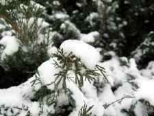 Ce fel de plante rezista iarna afara