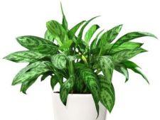 Plante de apartament care nu au nevoie de multa lumina