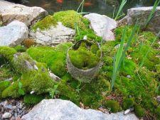 Muschiul de piatra, element decorativ usor de intretinut