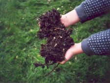 Cum folosesti rumegus la compost