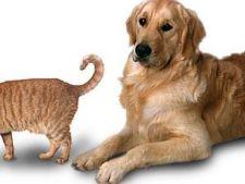 Cum prelungesti durata de viata a animalului tau