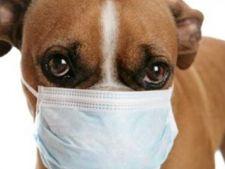 Sa-mi vaccinez cainele impotriva gripei?