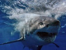 Cum si de ce ataca rechinii oameni