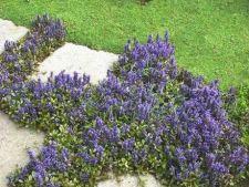 Alternative pentru iarba din curte