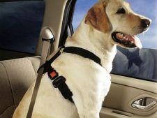 Animalul merita o centura de siguranta, cand mergi cu masina