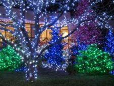 Luminitele de Craciun in gradina: ce trebuie sa stii - I