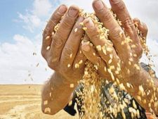 Impozit pentru micii producatori agricoli