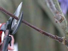 Taierea copacilor pe timp de iarna