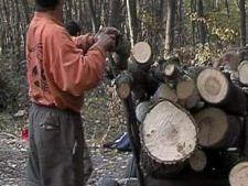 Mafia lemnului, decapitata