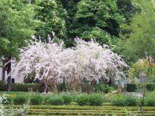 Arbusti cu flori pentru gardul viu