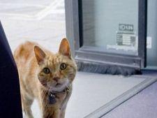 Nu vrei sa iti plimbi pisica? Invat-o sa mearga cu autobuzul
