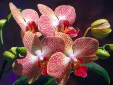 7 sfaturi pentru iubitorii de orhidee