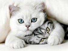 Cadouri perfecte pentru iubitorii de animale