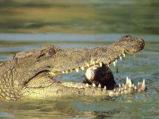 19 curiozitati haioase despre animale