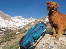 Cum sa urci pe munte cu cainele