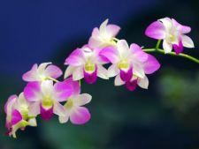 Top 4 orhidee usor de ingrijit